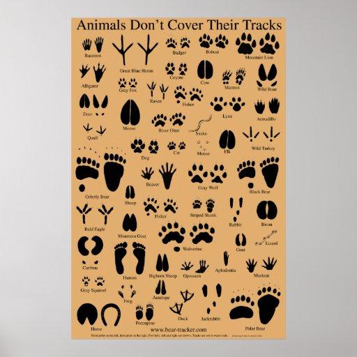 El animal sigue el poster