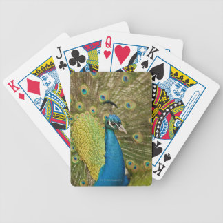El apuntalar del pavo real baraja cartas de poker