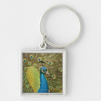 El apuntalar del pavo real llavero personalizado