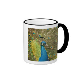 El apuntalar del pavo real taza a dos colores