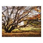 el árbol 11x14 en otoño promueve el parque impresion fotografica
