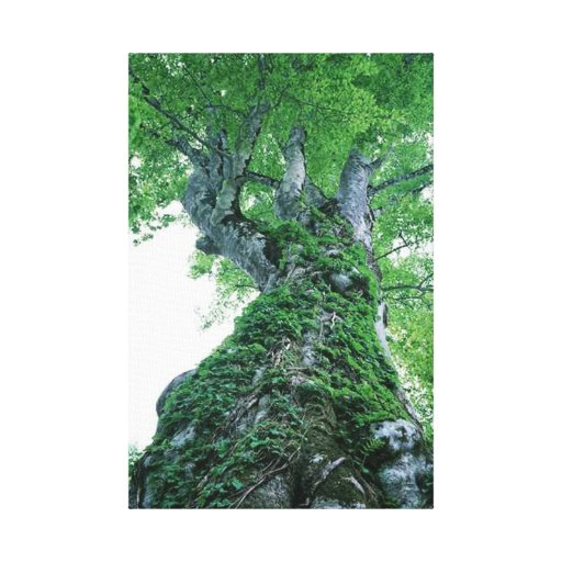 El árbol 89 estiró la impresión de la lona impresiones en lienzo estiradas