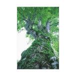 El árbol 89 estiró la impresión de la lona impresión en lienzo estirada