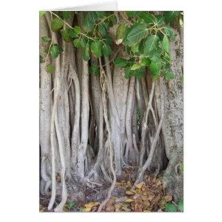 El árbol antiguo viejo del ficus arraiga la imagen tarjeta de felicitación