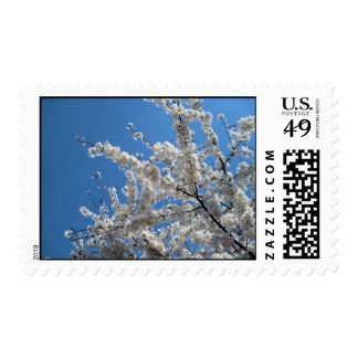 El árbol con blanco florece los sellos