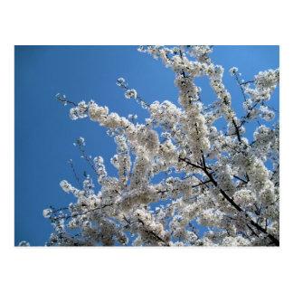 El árbol con blanco florece postal