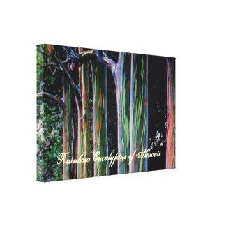 El árbol de eucalipto del arco iris de Hawaii Lona Estirada Galerías