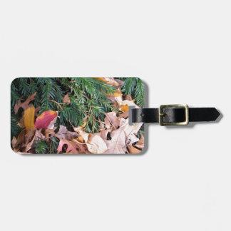 El árbol de hoja perenne del abeto del árbol de na etiquetas bolsas