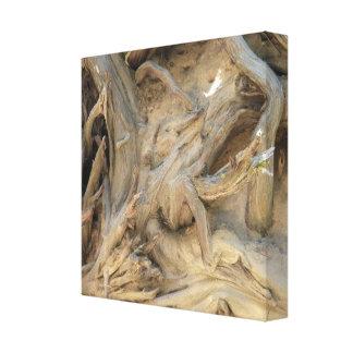 El árbol de la secoya gigante arraiga la lona estirada galerias