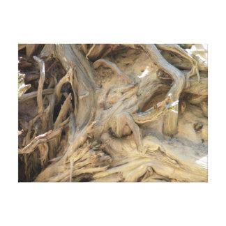 El árbol de la secoya gigante arraiga la impresion en lona
