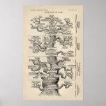"""El """"árbol de la vida """" de Ernst Haeckel Poster"""