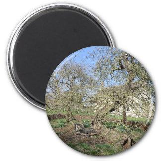 El árbol de Newton en el señorío de Woolsthorpe Imán Redondo 5 Cm