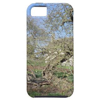 El árbol de Newton en el señorío de Woolsthorpe iPhone 5 Funda