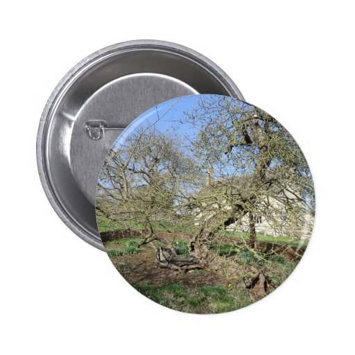 El árbol de Newton en el señorío de Woolsthorpe Pins