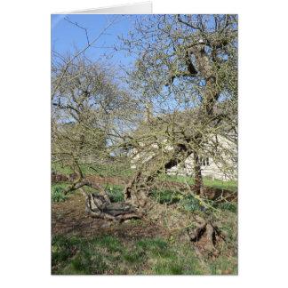 El árbol de Newton en el señorío de Woolsthorpe Tarjeta De Felicitación