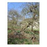 El árbol de Newton en el señorío de Woolsthorpe Postales