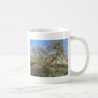 El árbol de Newton en el señorío de Woolsthorpe Taza Clásica