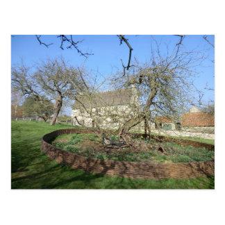 El árbol de Newton en el señorío de Woolthorpe Postal
