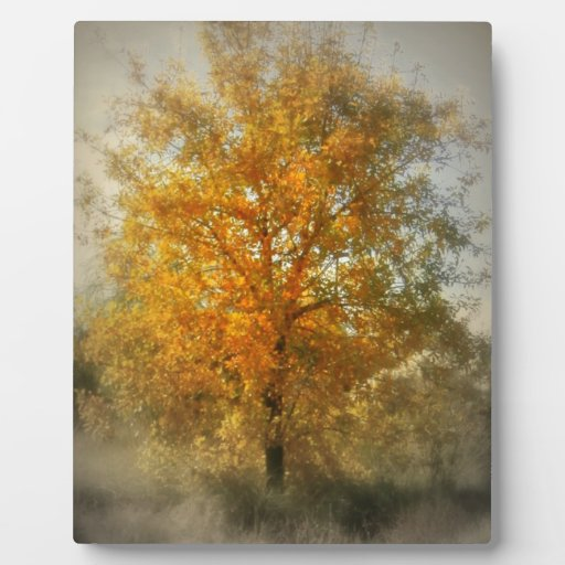 El árbol de oro placas con fotos