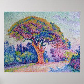 El árbol de pino en St Tropez, 1909 Póster