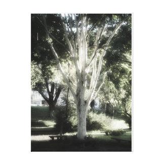 El árbol del EL de L'arbre del árvore del árbol A Impresión En Lienzo
