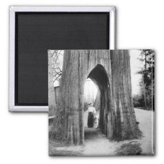 El árbol famoso de la bicicleta de Snohomish Imán Cuadrado