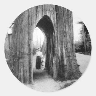El árbol famoso de la bicicleta de Snohomish Pegatina Redonda