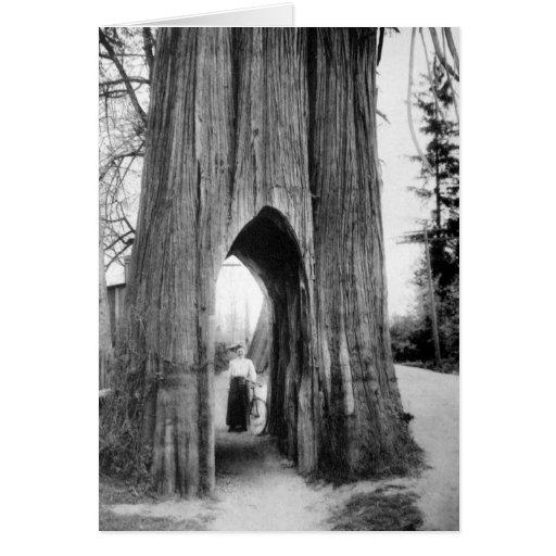 El árbol famoso de la bicicleta de Snohomish Felicitación