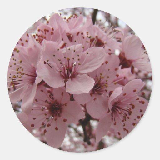 El árbol florece primavera de 6 de los PEGATINAS Pegatina Redonda