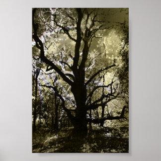 El árbol frecuentado poster