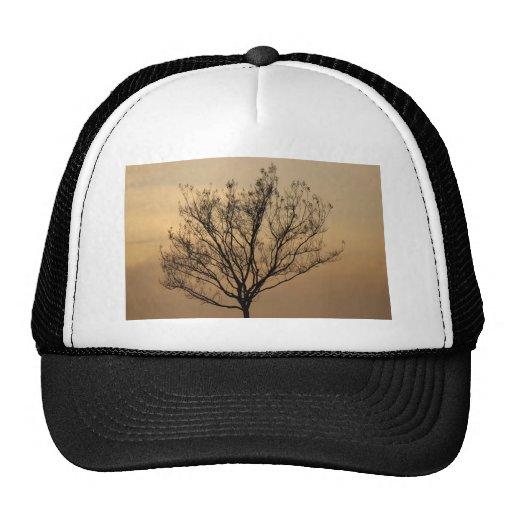 El árbol gorras