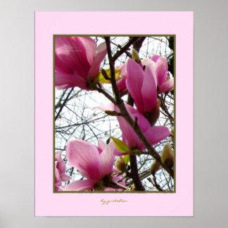 El árbol magnífico de la magnolia florece el poste póster