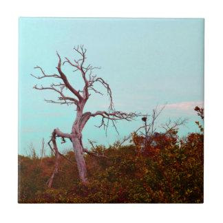 el árbol muerto contra verde sale del trullo del c teja cerámica