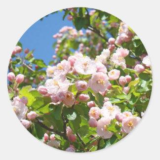 El árbol rosado florece primavera de los sellos de