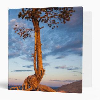 """El árbol se aferra en la repisa, parque nacional d carpeta 1 1/2"""""""
