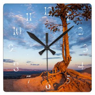El árbol se aferra en la repisa, parque nacional d reloj cuadrado