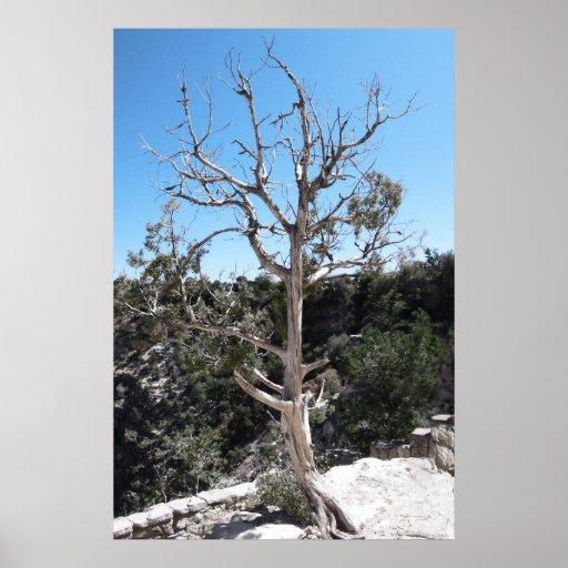 El árbol se coloca solamente impresiones
