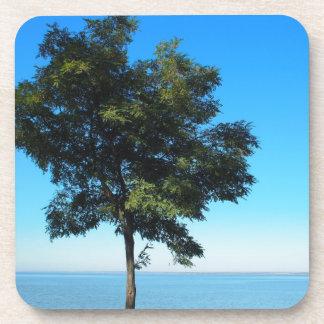 El árbol solo del acacia con verde se va en la posavasos de bebidas