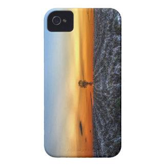 El árbol solo funda para iPhone 4 de Case-Mate