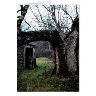 El árbol viejo de Madeline Tarjeta De Felicitación