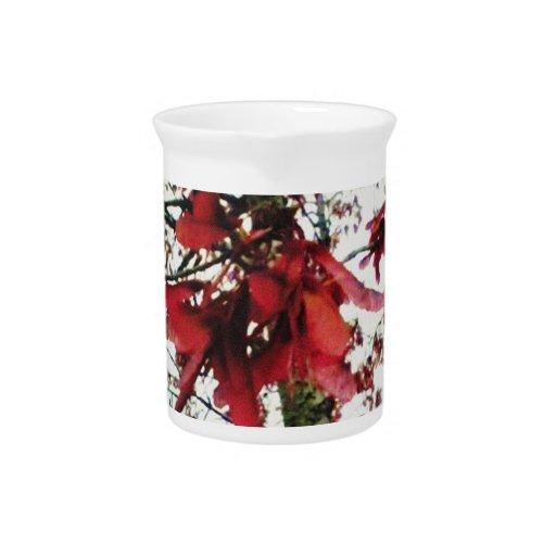 El arce rojo cierra natural botánico jarra de beber