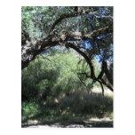 El arco de la naturaleza tarjeta postal