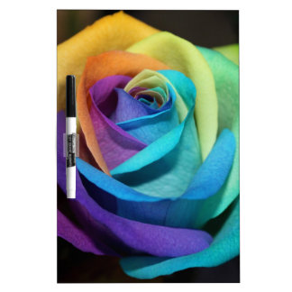 El arco iris subió florece destino del amor de la pizarras blancas de calidad