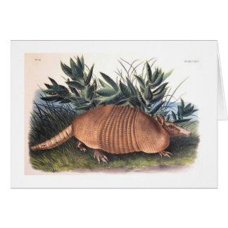 El armadillo de Audubon Tarjeta De Felicitación