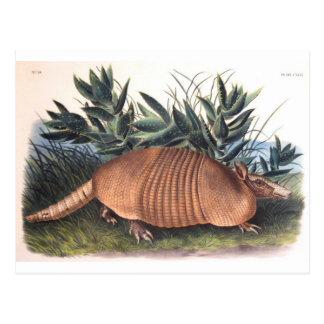 El armadillo de Audubon Tarjetas Postales