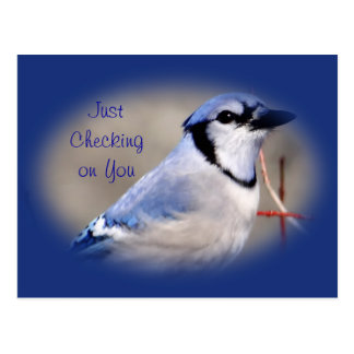 El arrendajo azul 8979 - modifique cualquier ocasi postales