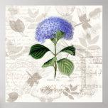 El arte botánico del vintage imprime el Hydrangea Poster