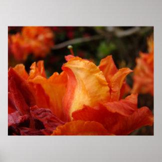 El arte de la flor de la azalea imprime la decorac póster