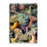 el arte de la naturaleza de Ernst Haeckel Tarjetas Postales