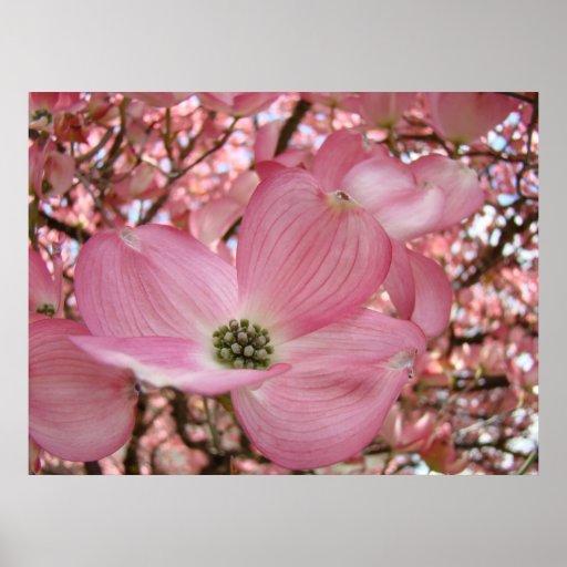 El arte de la naturaleza de las flores del DOGWOOD Póster